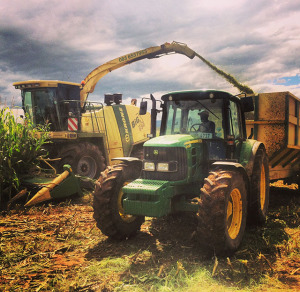 forage harvesting Agricultural Contracting Underberg