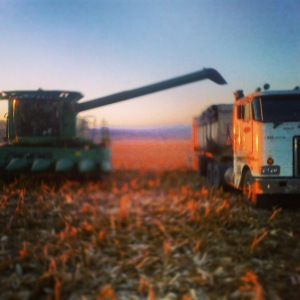 combined harvesting 2