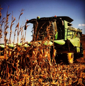 combined harvesting 3