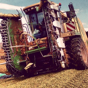 forage harvesting 1
