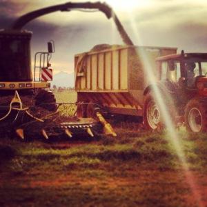 forage harvesting 2