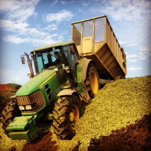 forage harvesting 3